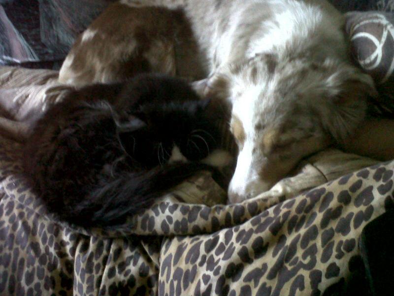 Mon animal se traîne sur les fesses! - Vétérinaire Journet ...